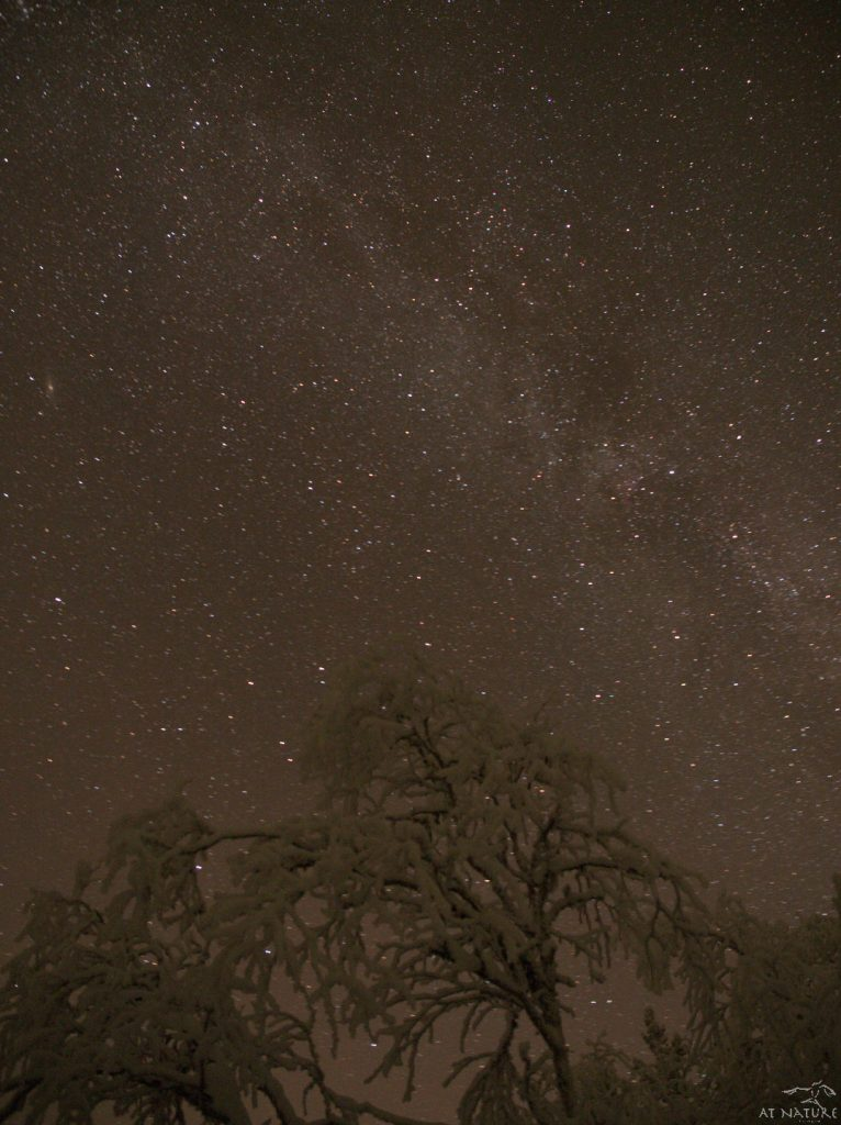 Milky Way and snowy downy birch.
