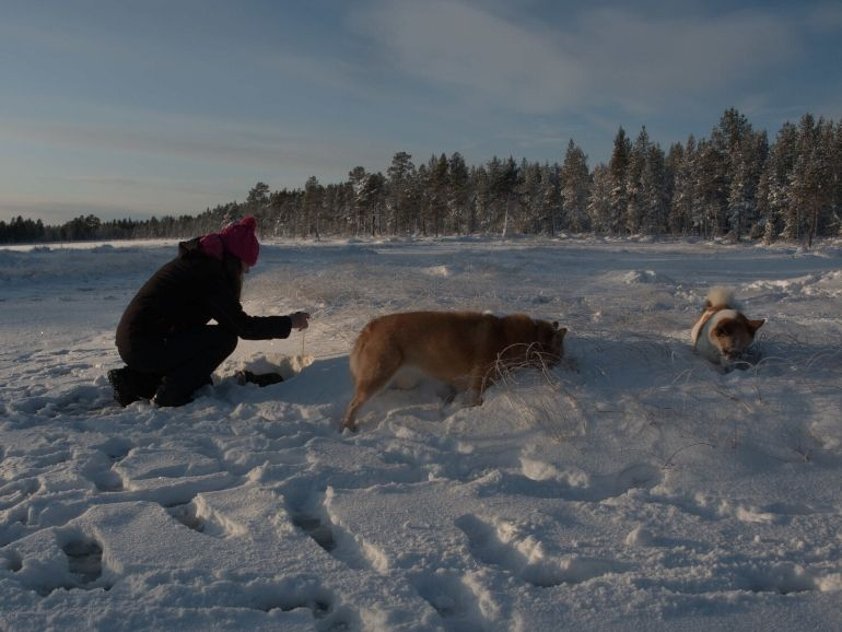 Terhi is measuring the snow depth with Hiski and Sissi.