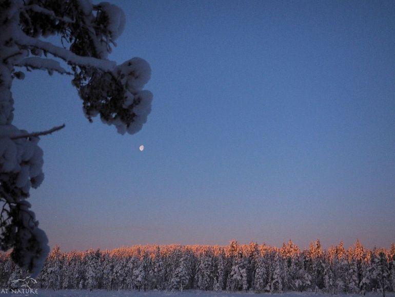 Kuu aamulla AT Naturen pihapiirissä.