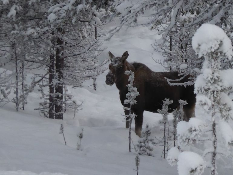 Sometimes we see elk during the ride of AT Nature.