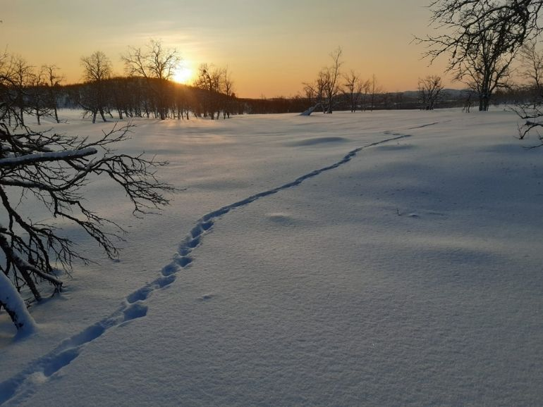 Animal tracks and sunset during the trip of AT Nature.